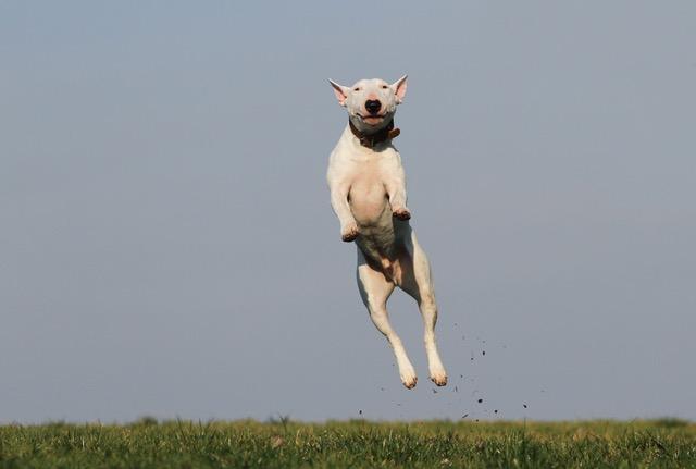 飛んでる犬
