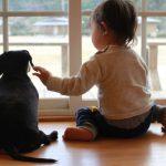窓辺にて、赤ちゃんと犬