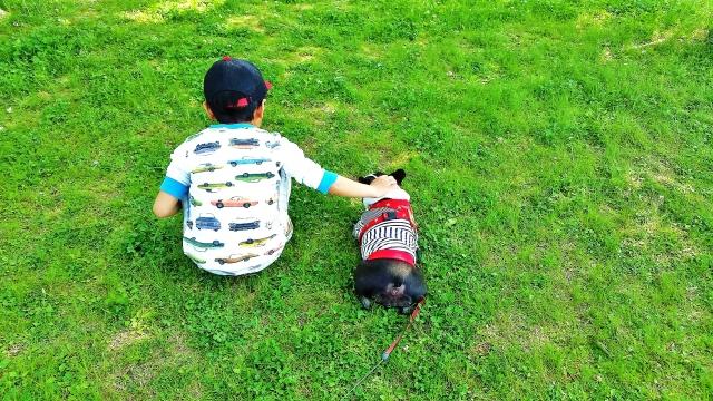 犬と子供の友情