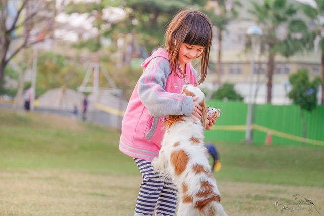 キャバリアと遊ぶ少女
