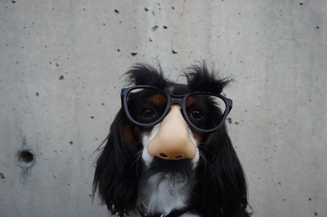 鼻眼鏡をつける犬