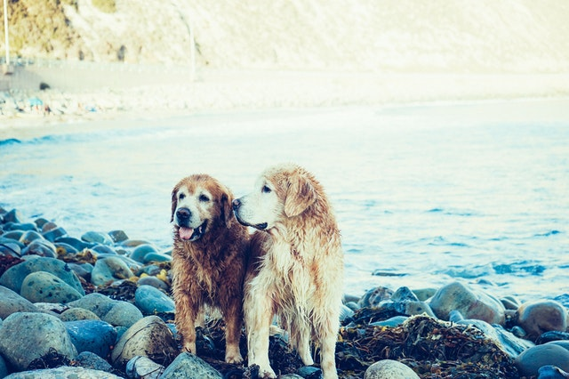 湖のほとりにいる犬