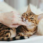 撫でられてる猫