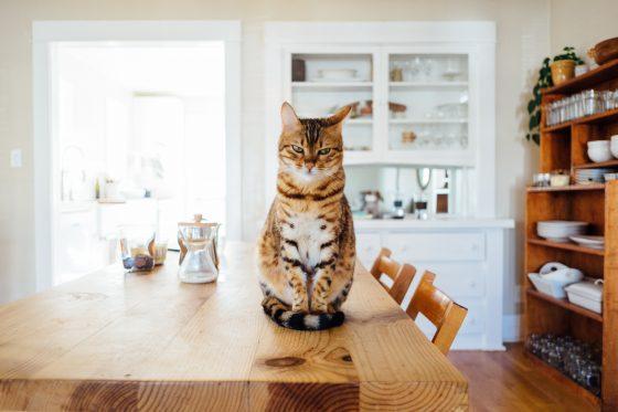 猫 机の上