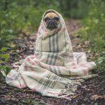 毛布被った犬