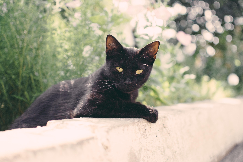塀でこちらを見る黒猫
