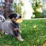 雑草を食べる犬