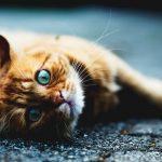 道路で寝ている猫