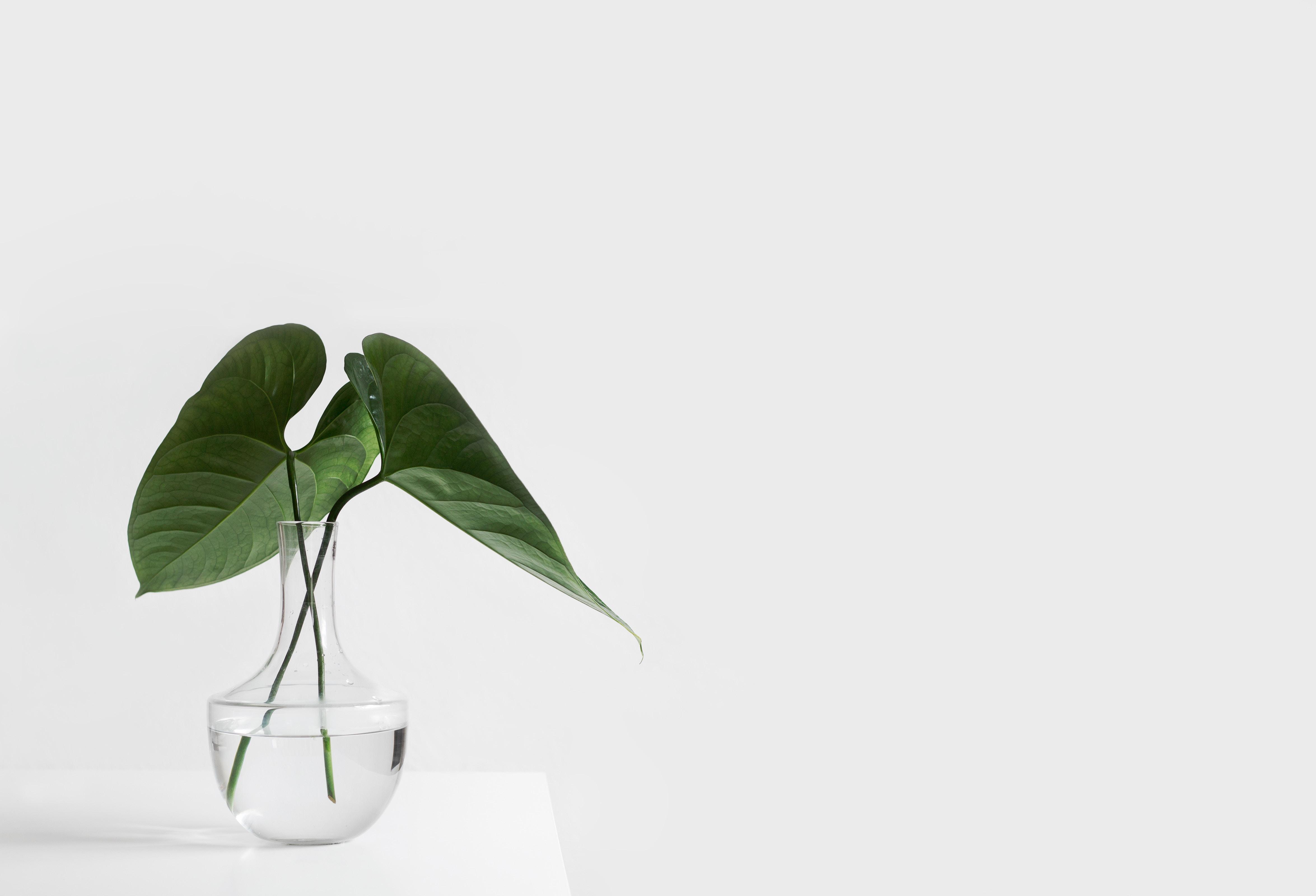 緑の観葉植物