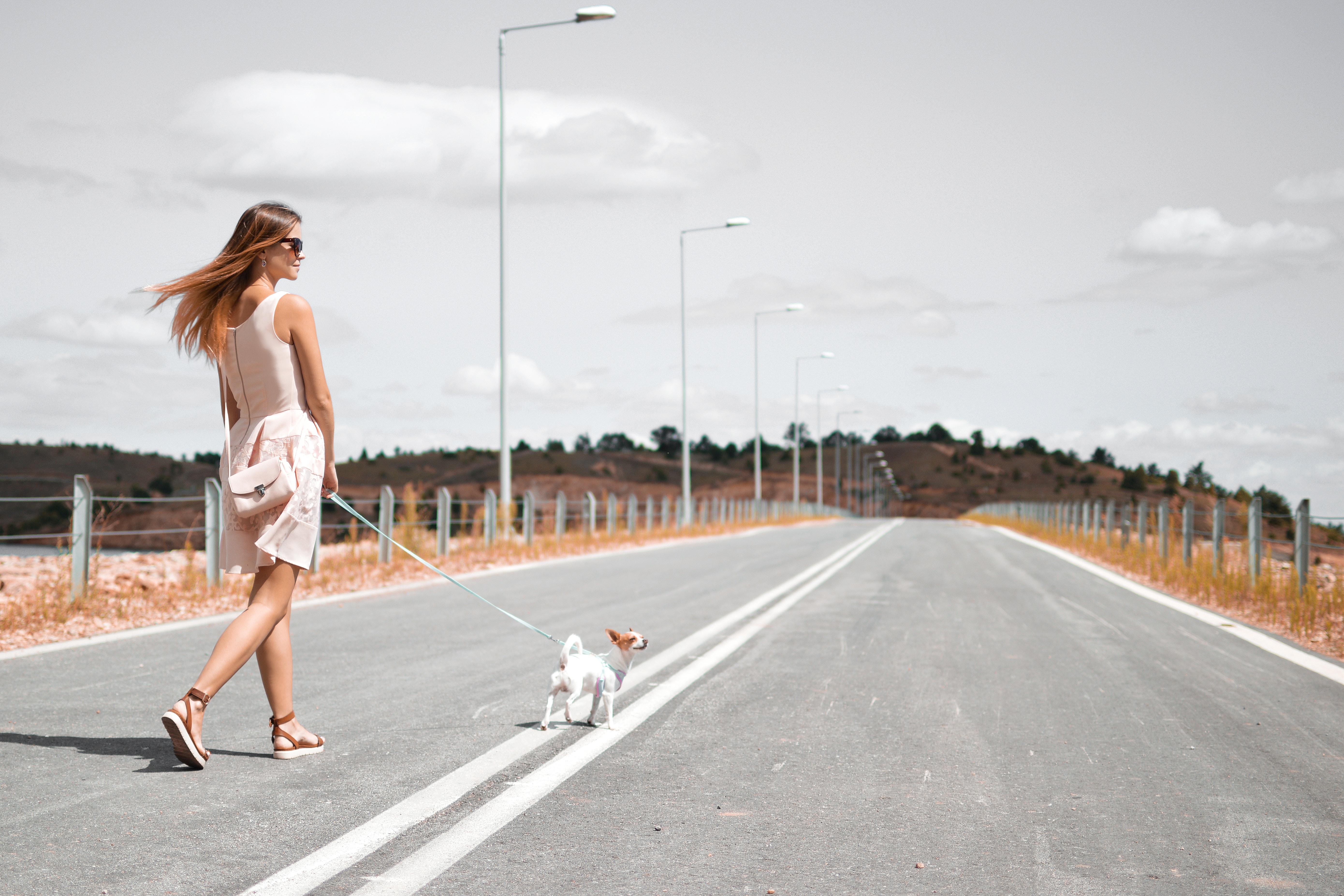 道路を散歩する女性と犬