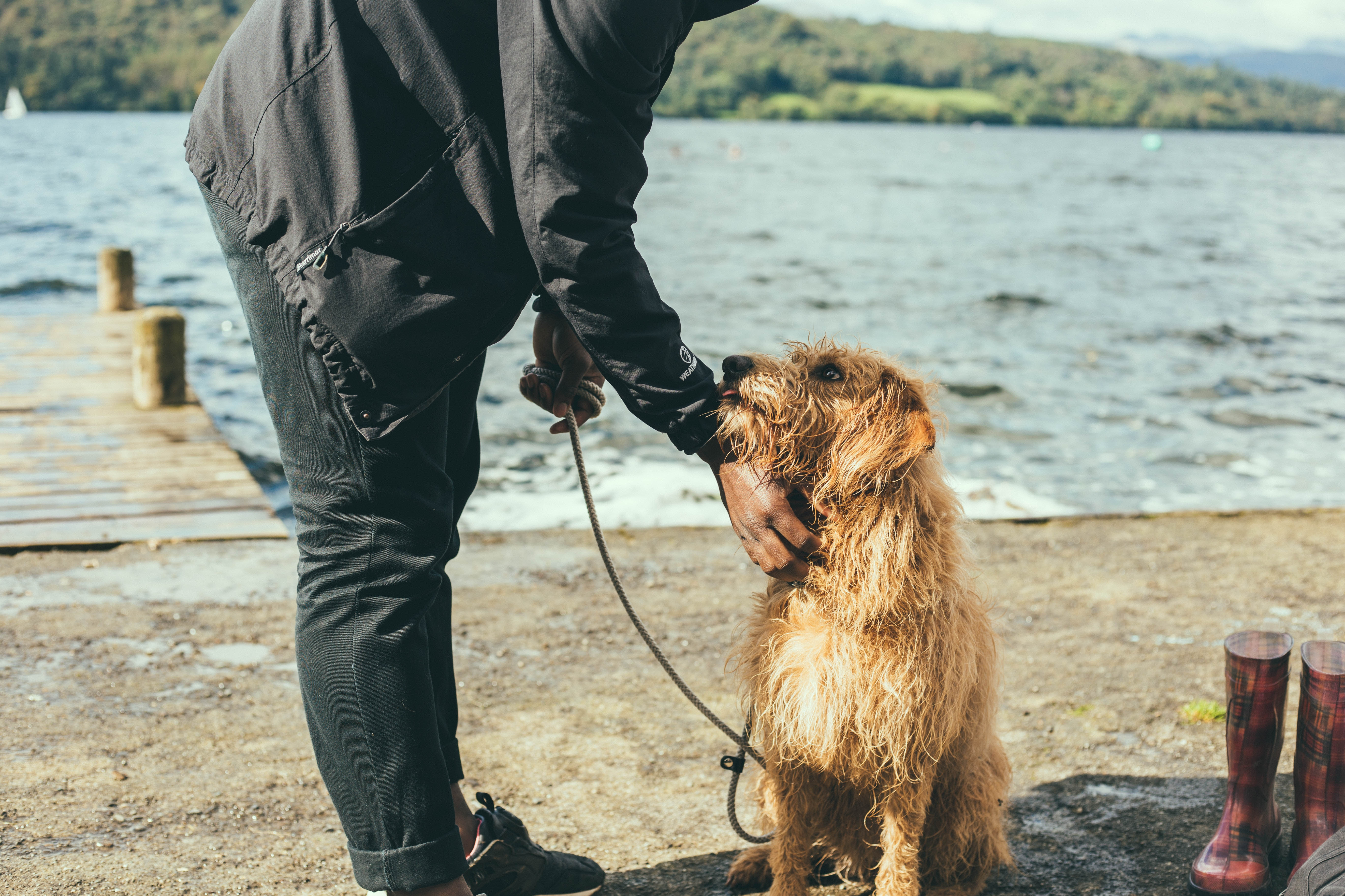 散歩中、飼い主に撫でてもらう犬