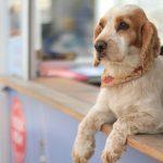 店の窓から顔を出す犬
