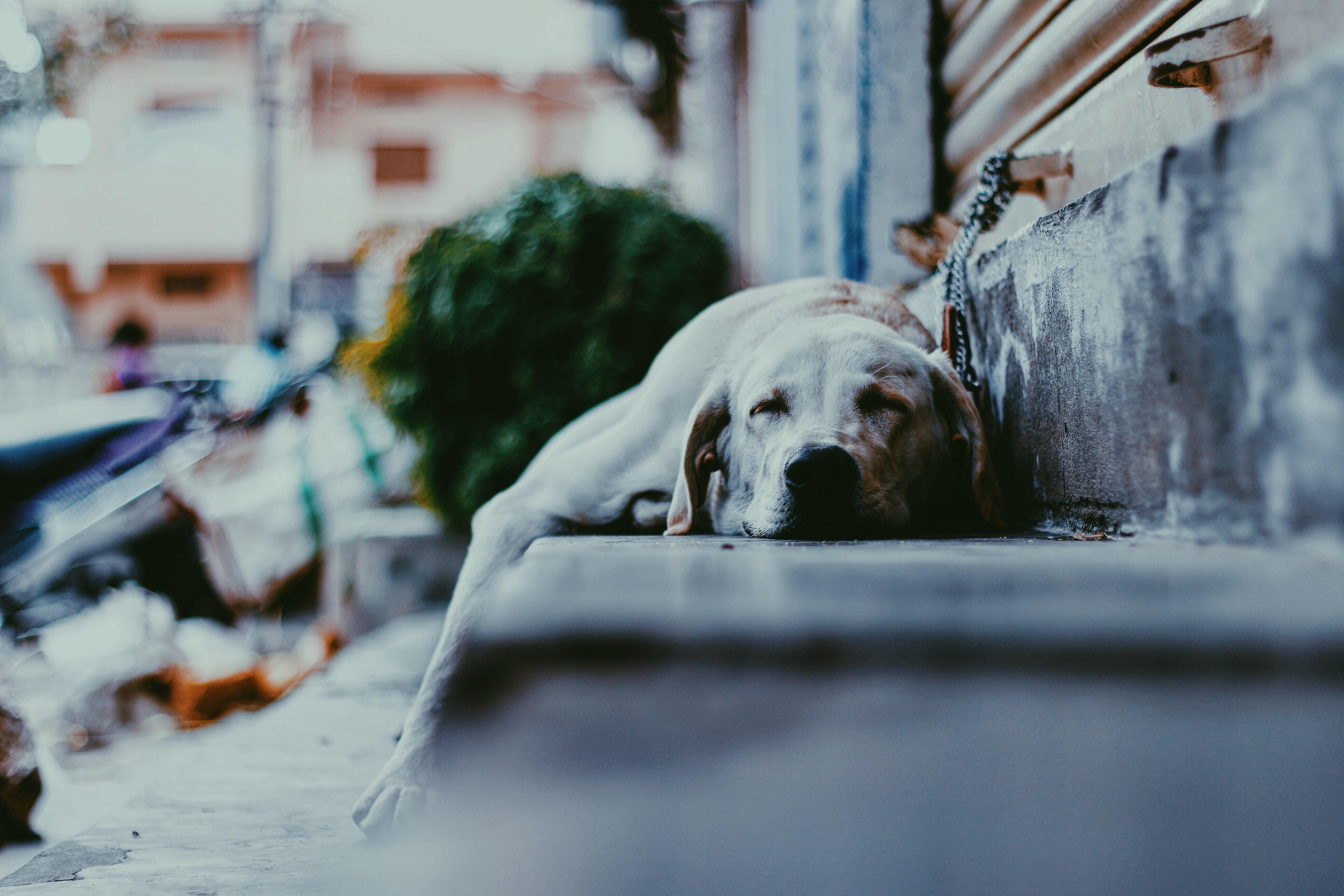 階段で寝ている犬