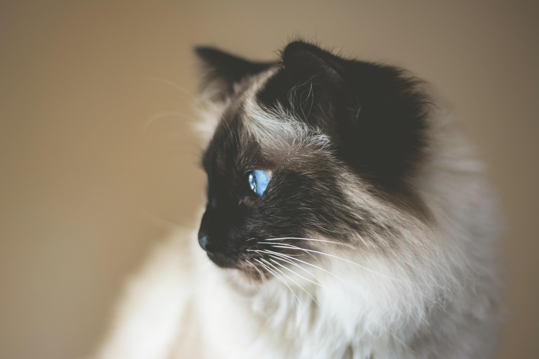 横を見てる猫