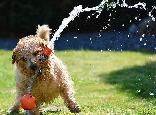 犬が水で遊んでいる