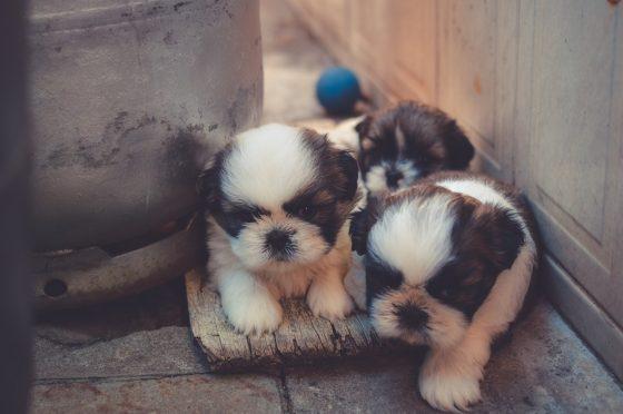 隠れる子犬たち