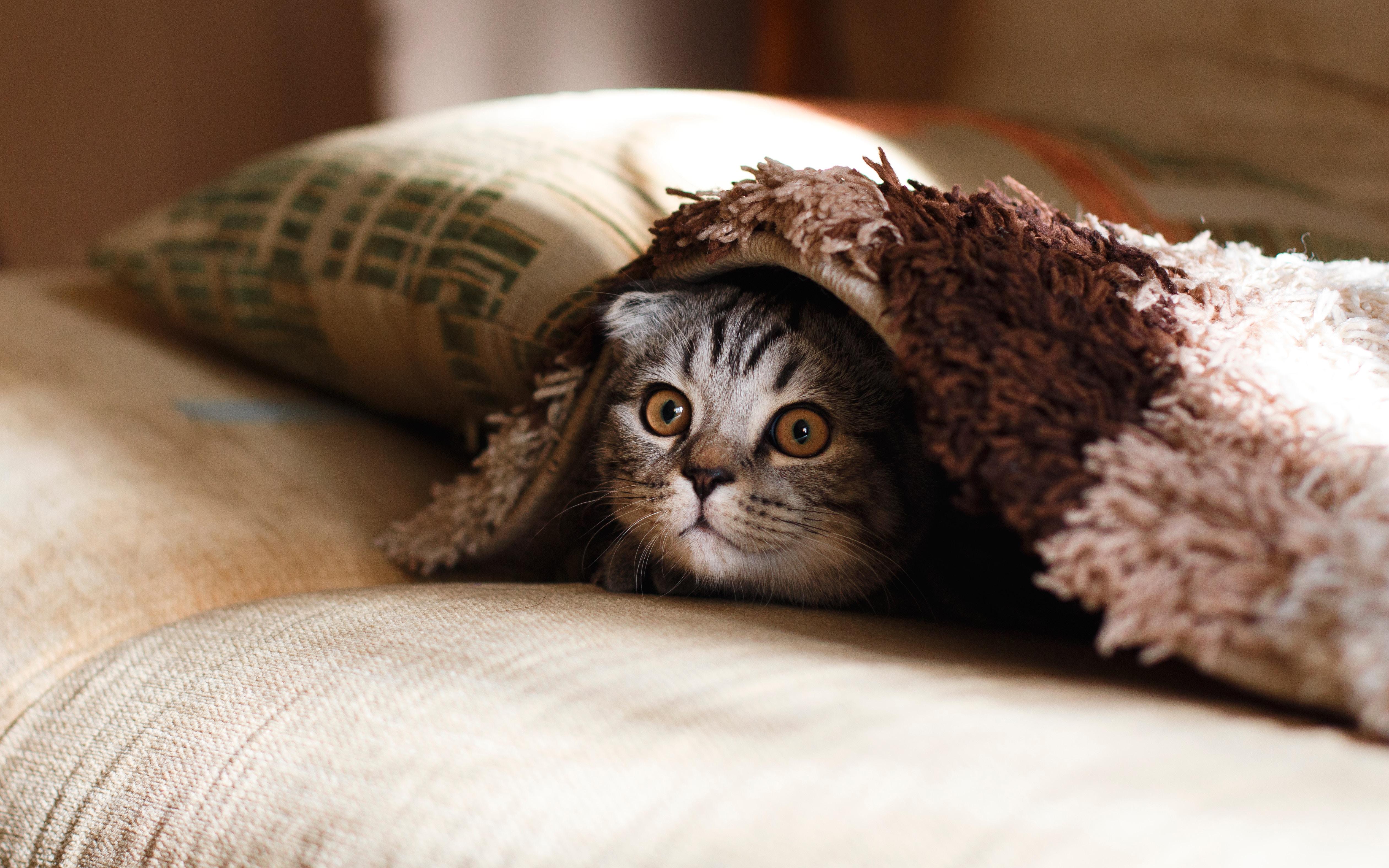ひょっこり顔を出している猫