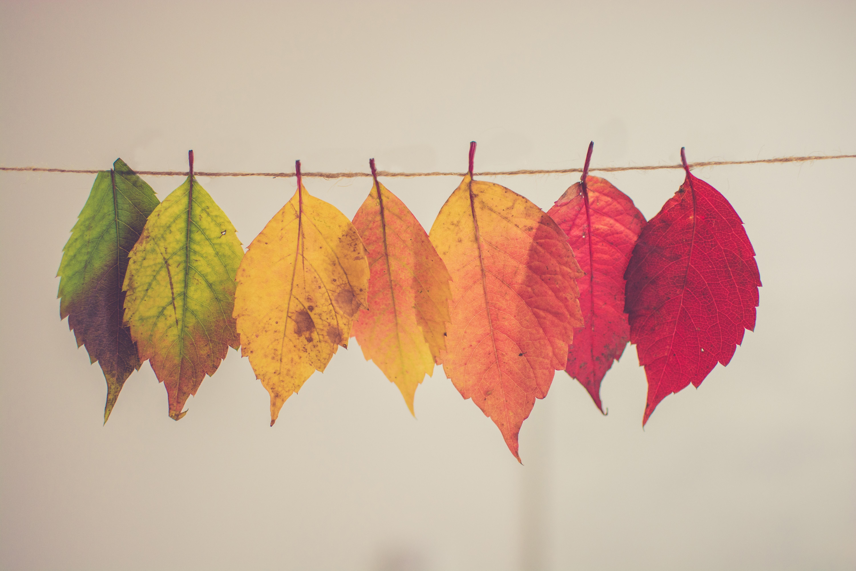 秋を思わす、綺麗な葉っぱ