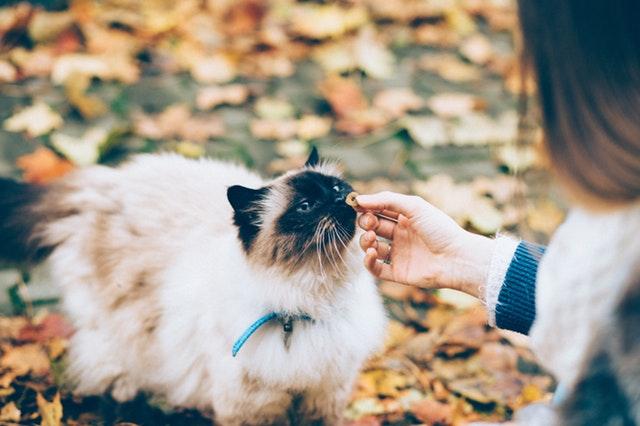 落ち葉と猫と。