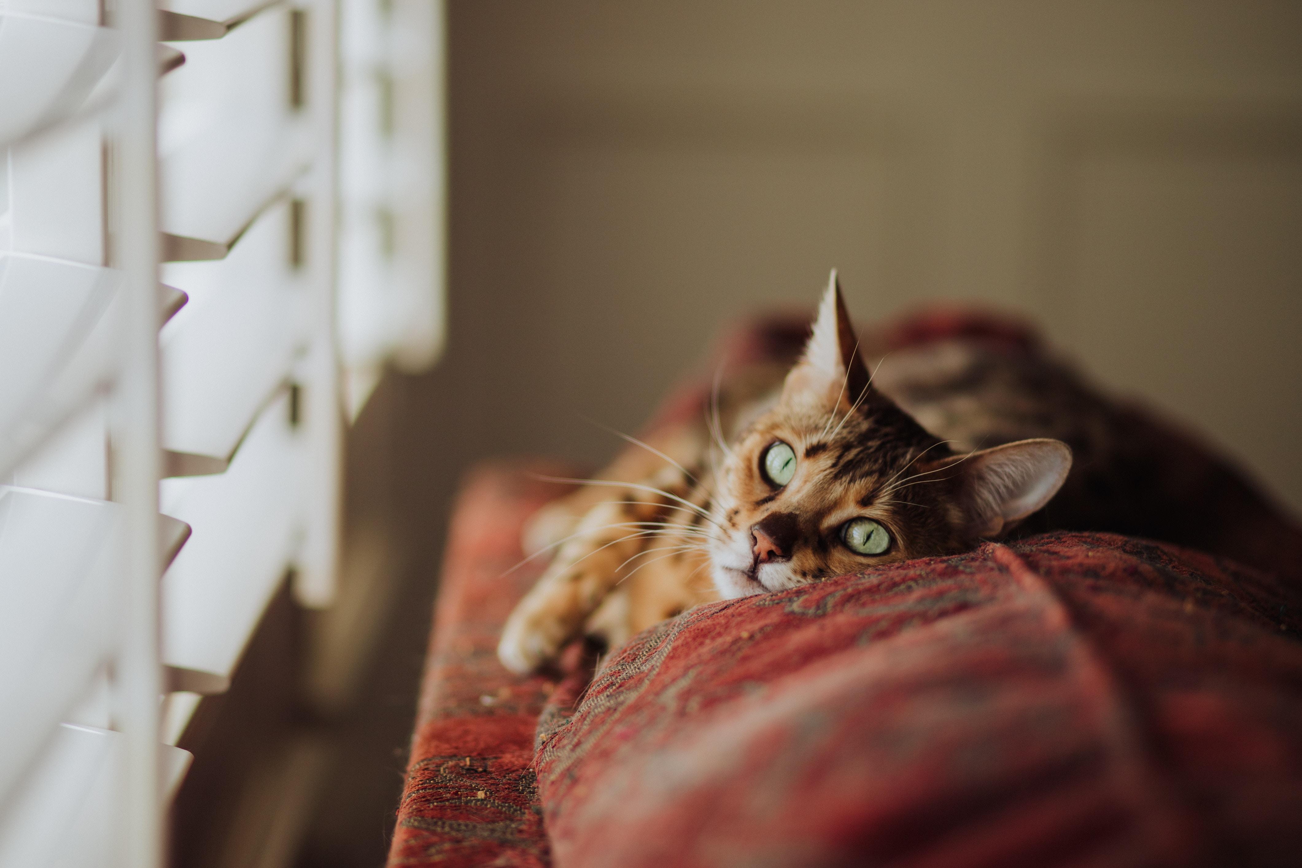 窓辺でこっちを見てる猫