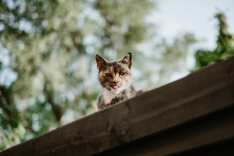 高いところから見てる猫