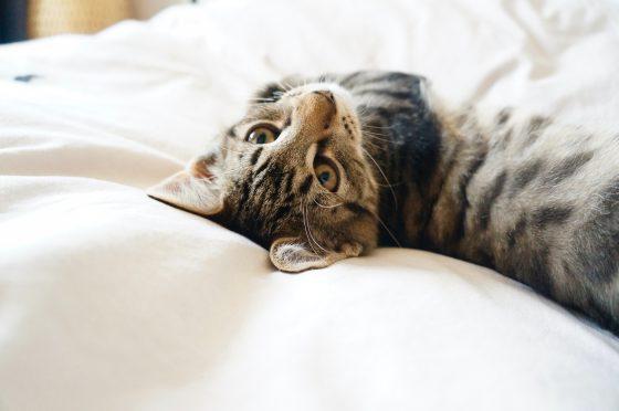 くつろいで寝てる猫