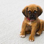 赤い首輪をつけた犬