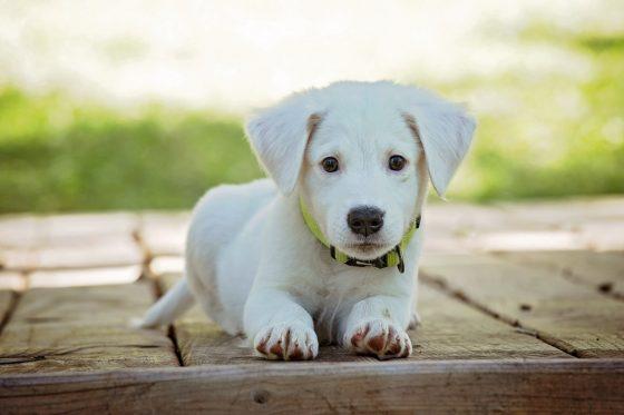 黄色い首輪を付けた犬