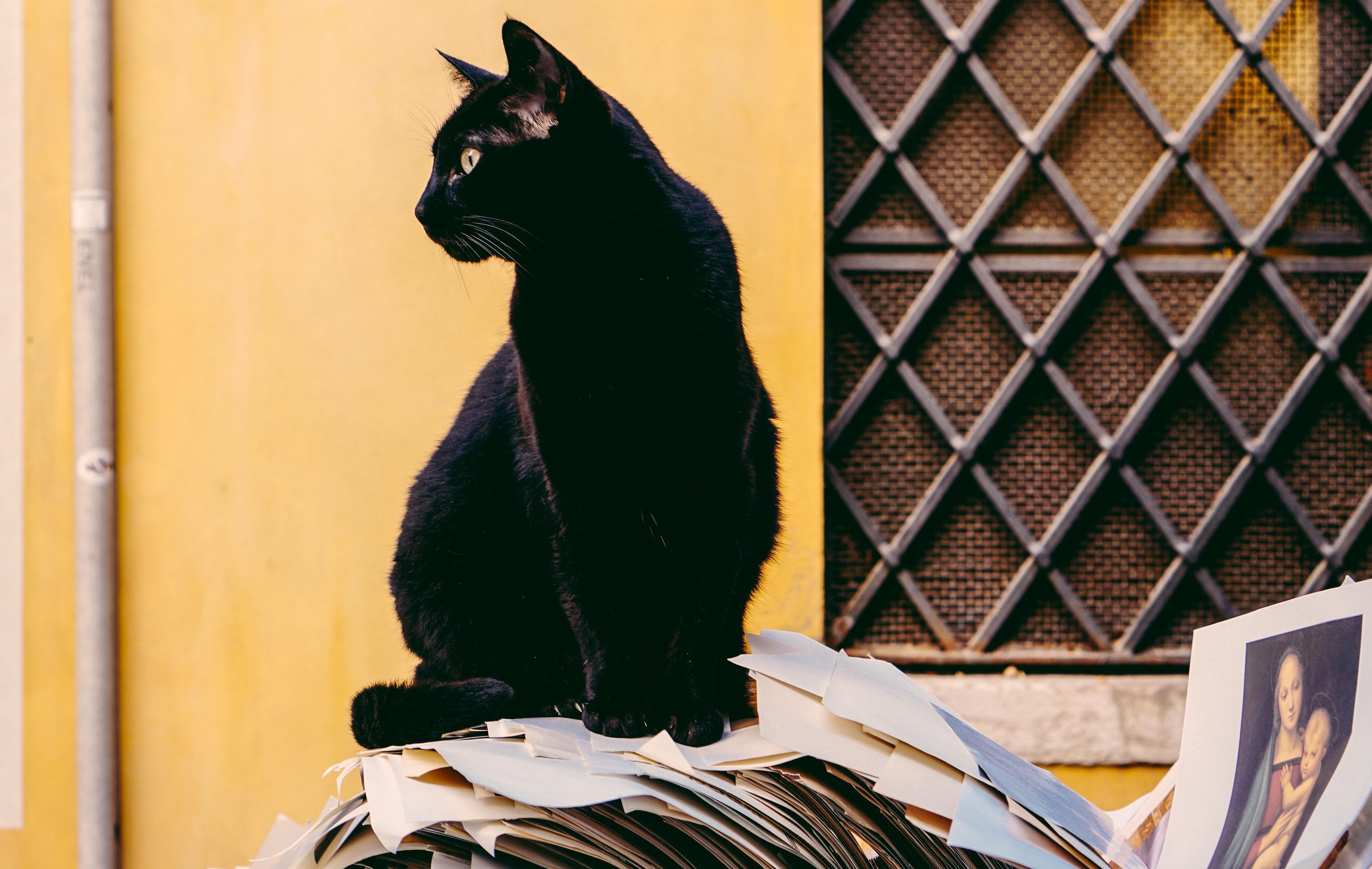 書類の黒猫