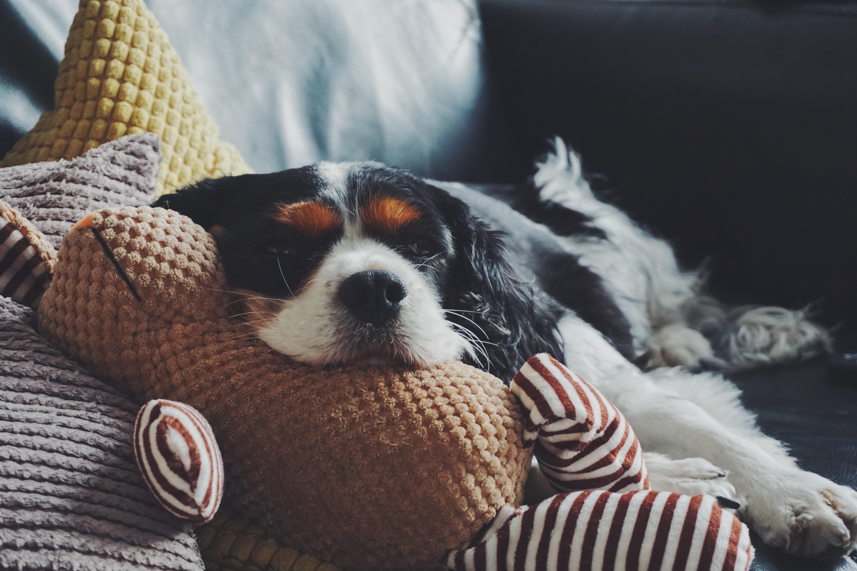 寝ている犬