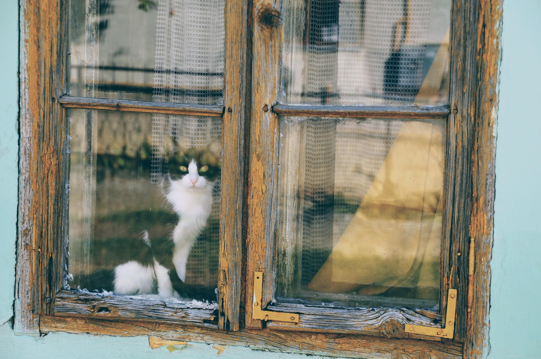 窓から眺めている猫