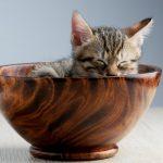 茶碗に入った猫