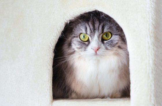 キャットハウスにこもる猫