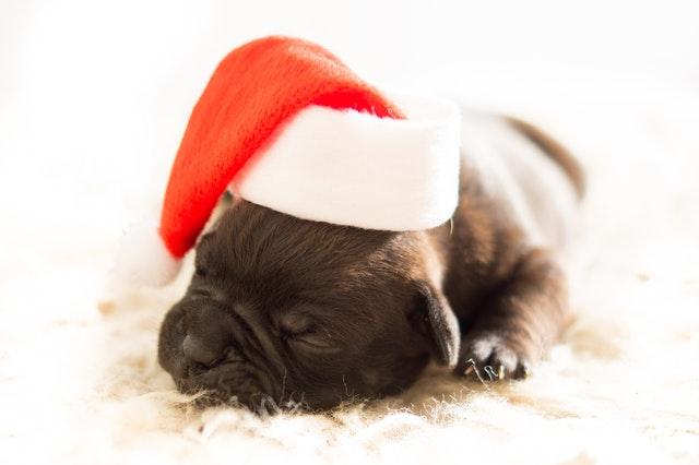 犬クリスマス