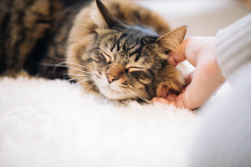 撫でてたら気持ちよさそうに寝た猫