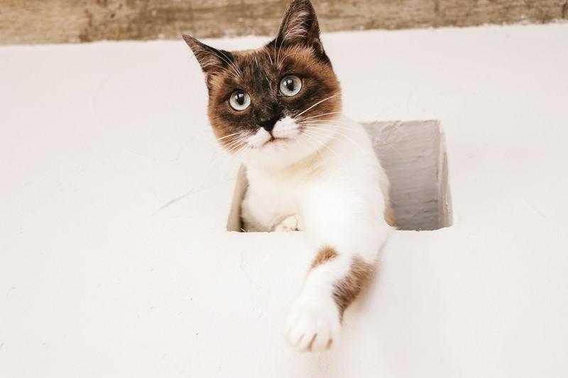 穴から顔を出して何かを狙う猫