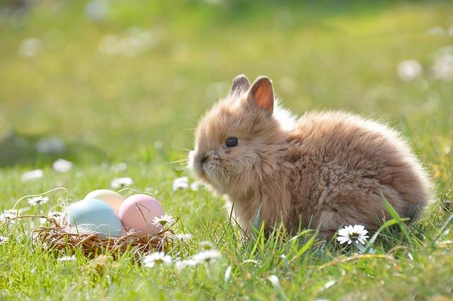 イースター 卵とうさぎ