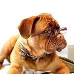 しつけ教室の先生犬