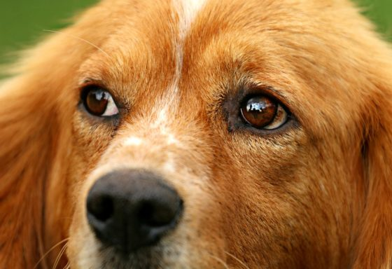 何があるのか見つめる犬