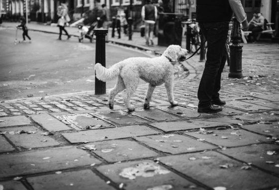 街中を散歩する犬