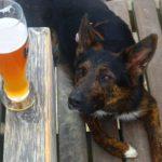 ビールを見つめる犬