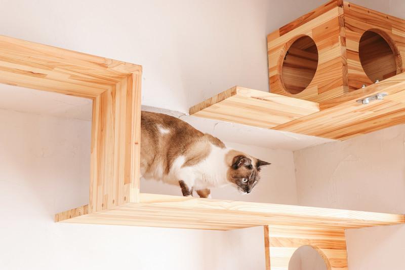 キャットステップを下りる猫