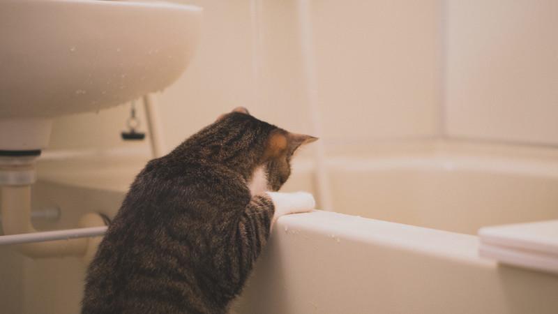 浴槽にお湯が溜まっていくにゃー