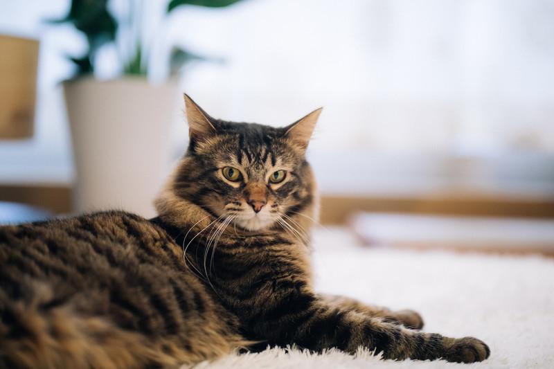 飼い主の気配を感じ取った猫