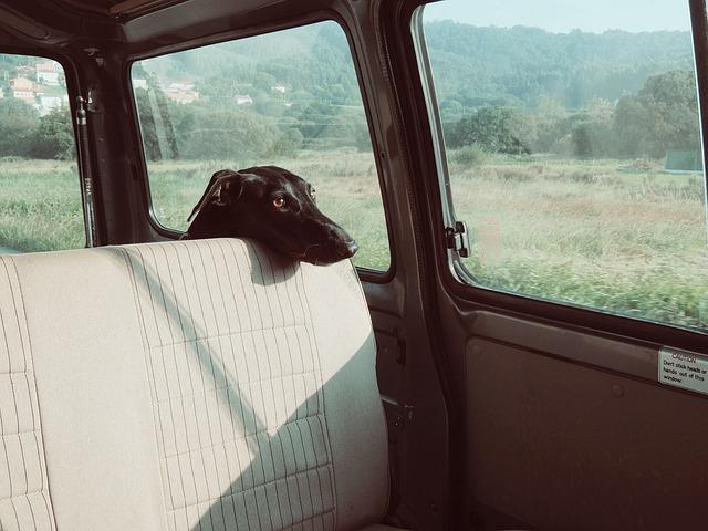 シートに顔を置く黒犬