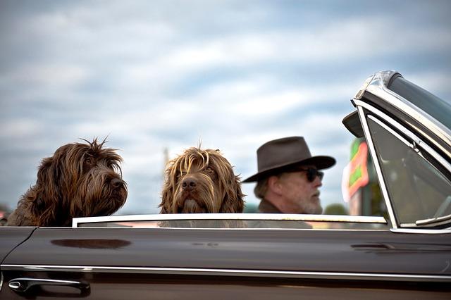 2匹の犬とオープンカードライブ
