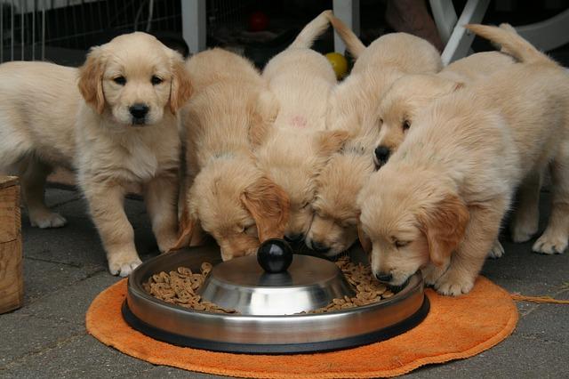 多頭犬食す