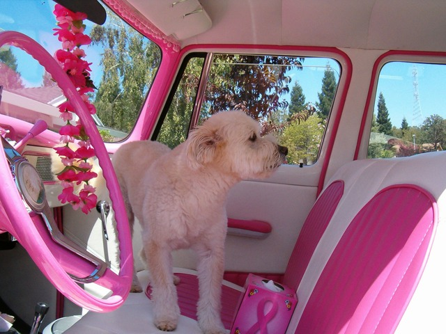 ピンク車内の犬