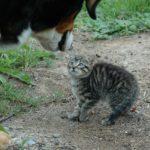 犬に睨まれて怯える猫