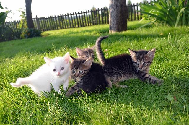 屋外で遊ぶ子猫たち